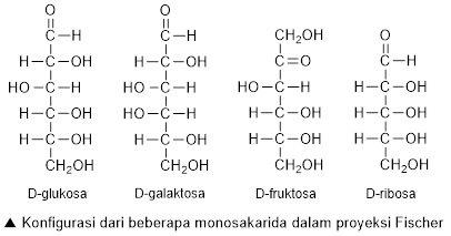 Biomolekul Karbohidrat Protein Lipid Asam Nukleat Struktur Uji Golongan