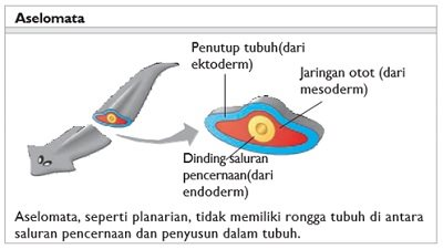 erózió és nemi szemölcsök hasi rák jelentése